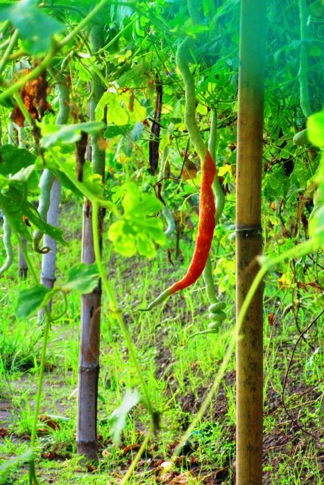 Organic plants are plenty around the property.